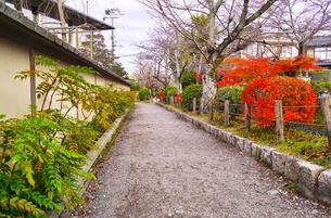 晩秋の京都、朝の哲学の道からみた景色の写真素材 [FYI01196510]