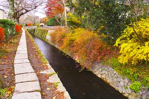 晩秋の京都、朝の哲学の道からみた景色の写真素材 [FYI01196511]