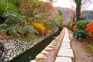 晩秋の京都、朝の哲学の道からみた景色の写真素材 [FYI01196512]