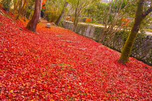 晩秋の京都、朝の哲学の道の側にある散り紅葉と石のベンチの写真素材 [FYI01196514]