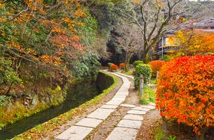晩秋の京都、朝の哲学の道からみた景色の写真素材 [FYI01196515]