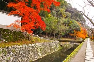 晩秋の京都、朝の哲学の道からみた景色の写真素材 [FYI01196516]