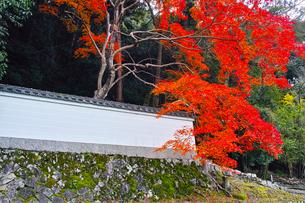 晩秋の京都、朝の哲学の道からみた景色の写真素材 [FYI01196517]