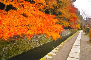 晩秋の京都、朝の哲学の道からみた景色の写真素材 [FYI01196518]