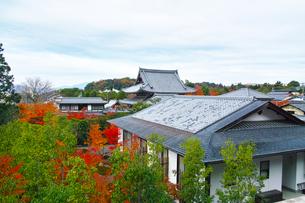 晩秋の京都、朝の哲学の道から見た京都の街並みの写真素材 [FYI01196519]