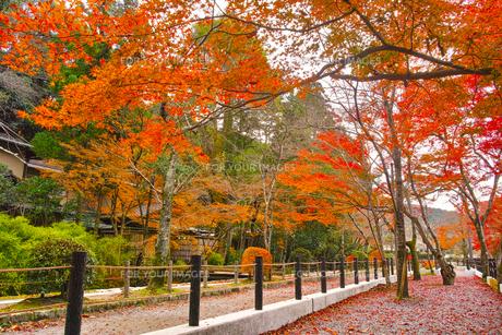 晩秋の京都、朝の哲学の道からみた景色の写真素材 [FYI01196520]