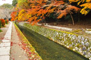 晩秋の京都、朝の哲学の道からみた景色の写真素材 [FYI01196521]