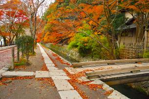 晩秋の京都、朝の哲学の道からみた景色の写真素材 [FYI01196522]