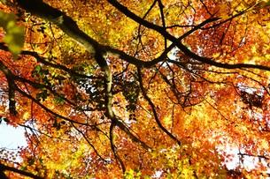 季節の背景素材・紅葉の季節 / 九州福岡県朝倉市 の写真素材 [FYI01196549]