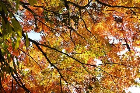 季節の背景素材・紅葉の季節 / 九州福岡県朝倉市 の写真素材 [FYI01196550]