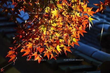 季節の背景素材・紅葉の季節 / 九州福岡県朝倉市 の写真素材 [FYI01196553]
