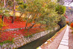晩秋の京都、朝の哲学の道からみた景色の写真素材 [FYI01196557]