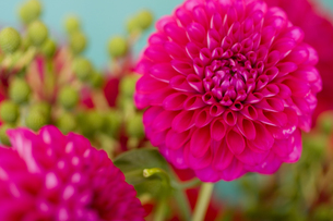 beautiful pink flower on light blue backgroundの写真素材 [FYI01196643]