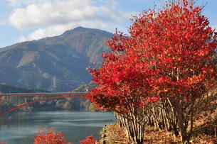 宮ヶ瀬湖の秋の写真素材 [FYI01196834]