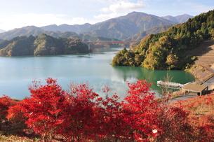 宮ヶ瀬湖の秋の写真素材 [FYI01196835]