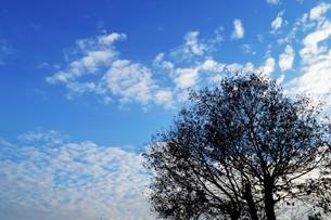 日本の風景・夕焼けシルエット / 九州福岡県朝倉市の写真素材 [FYI01196863]
