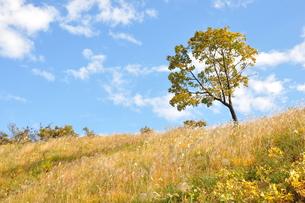 秋色の丘の風景の写真素材 [FYI01196991]