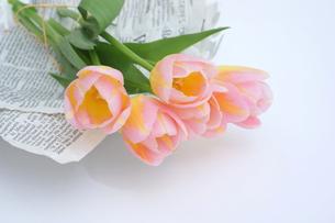 ピンク色のチューリップの写真素材 [FYI01197192]