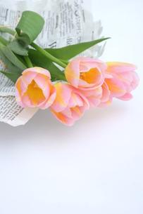 ピンク色のチューリップの写真素材 [FYI01197194]