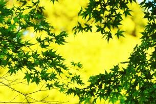 季節の背景素材・初夏を彩る新緑の写真素材 [FYI01197272]