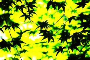 季節の背景素材・初夏を彩る新緑の写真素材 [FYI01197273]