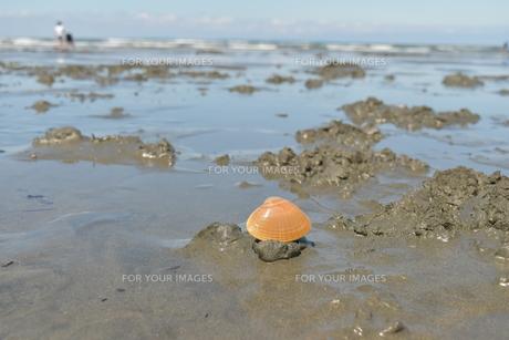 潮干狩りの写真素材 [FYI01197332]