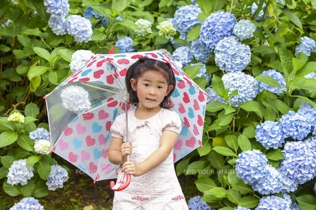 紫陽花と女の子の写真素材 [FYI01197337]