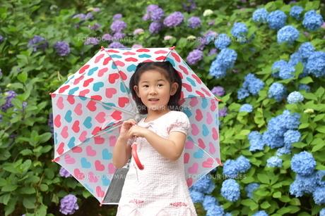 紫陽花と女の子の写真素材 [FYI01197338]