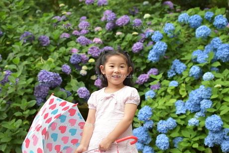 紫陽花と女の子の写真素材 [FYI01197339]
