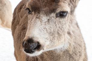 野生動物の写真素材 [FYI01197387]