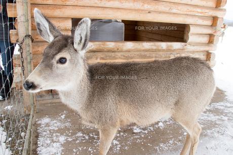 野生動物の写真素材 [FYI01197388]