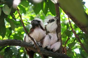 二匹の猿の写真素材 [FYI01197426]