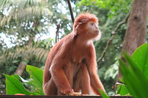 猿の写真素材 [FYI01197431]