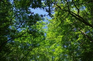 野鳥の森の写真素材 [FYI01197637]