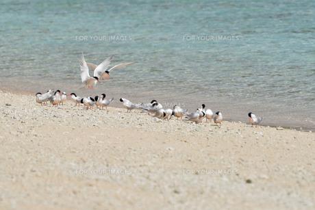 宮古島/夏の波打ち際の写真素材 [FYI01197755]