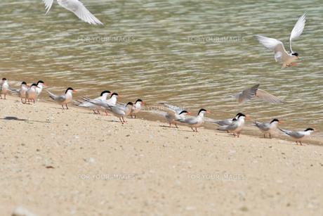 宮古島/夏の波打ち際の写真素材 [FYI01197761]