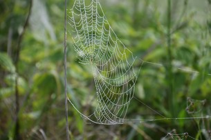 草むらのデザイナー・作品 「クモの網」の写真素材 [FYI01197795]