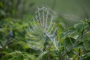 草むらのデザイナー・作品 「クモの網」の写真素材 [FYI01197797]