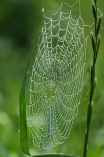 草むらのデザイナー・作品 「クモの網」の写真素材 [FYI01197799]