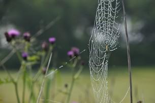 草むらのデザイナー・作品 「クモの網」の写真素材 [FYI01197802]