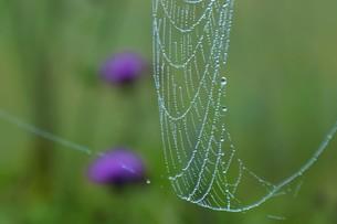 草むらのデザイナー・作品 「クモの網」の写真素材 [FYI01197803]