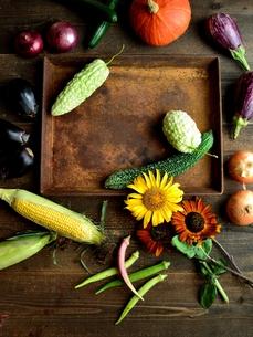 夏野菜と向日葵と錆びたトレーの写真素材 [FYI01197872]