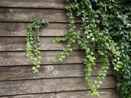 ツタの這う壁の写真素材 [FYI01197965]