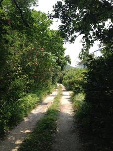 沖縄の小道の写真素材 [FYI01197989]