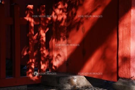 日本の風景・太古の息づかい 神社境内の写真素材 [FYI01198042]