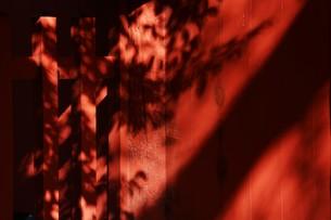 日本の風景・太古の息づかい 神社境内の写真素材 [FYI01198043]