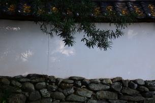 日本の風景・太古の息づかい 神社境内の写真素材 [FYI01198047]