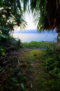 沖縄、海への防風林からの抜け道の写真素材 [FYI01198090]