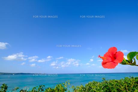 沖縄のハイビスカスの写真素材 [FYI01198092]