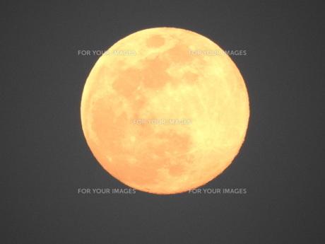 オレンジの満月の写真素材 [FYI01198112]